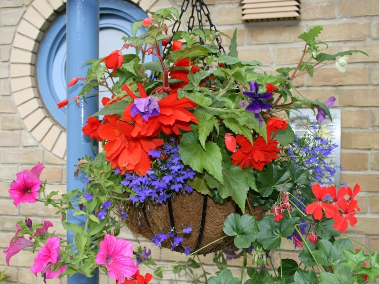 Culverdale-Hanging-Basket