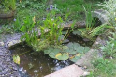 Moxham-House-Pond